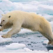 Greenpeace lancia una campagna per salvare l'artico